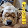 2020年5月15日香川県 緊急事態宣言解除!でも・・・