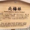 栗林公園梅観茶会