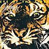 Survivor - Eye Of The Tiger ー
