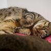 ネコが膀胱炎になって2週間と少しが経った