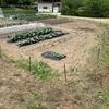 土曜日の午前中は、枝豆とカボチャの定植