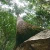 初心者ですが歩いてみました!【熊野古道・馬越峠まごせとうげ】から【象の背】まで画像多めの記録