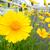 「料理をおいしそうに撮る」「スイーツをかわいく撮る」で花を撮影 LUMIX DMC-TZ85