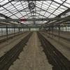 秋作キュウリの準備から定植、定植直後の管理作業(農大72,75,77日目:8月前半の農家実習)