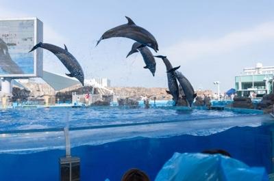 【あえて名古屋に行ってきた旅行記:5】矢場とんで味噌づくし、名古屋港水族館でイルカづくし。