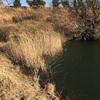 『太田ヶ谷池』静岡県掛川野池群バス釣り完全攻略マップ
