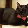 今日の黒猫モモ&白黒猫ナナの動画ー598
