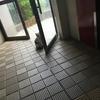 猫八幡大菩薩
