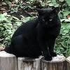 黒猫の性格は、甘えん坊で人懐っこいのは本当だった!?