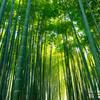 鎌倉の竹林で有名な報国寺へ行ってた