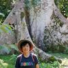 ベリーズ カラコル遺跡の巨木とピラミッド