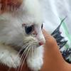 【猫の保護】選択のとき、猶予なし ~ひとつの命をつなぐこと(3/10)~
