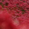 ごんの秋まつりの真っ赤な彼岸花