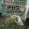 ついに最終回!初うさんぽ会 in 水元公園(4)