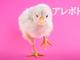 【アレボド】フリー素材のヒヨコが可愛いけど、お題はにわとりなボドゲ