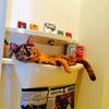 本日の猫温度計