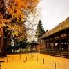 【観光】秋を感じる時間がない人へ。喜多方 長床から30分で巡れる紅葉スポット。