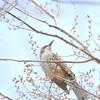 【207話・FUJIFILM】XF100-400mm F4.5-5.6R LM OIS WRで撮る野鳥と東急東横線