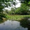 吉祥寺駅から善福寺公園のアクセスとボートの無い下池をオススメする3つの理由