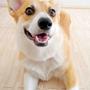 【薬の値段】病院の半額以下で買える犬猫用のフィラリア、ノミダニ予防薬はネット通販で