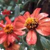 スマホで楽しく花の写真を撮る方法