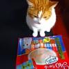 愛猫るーくんにプレゼント