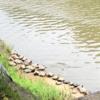 お散歩日和      亀の甲羅干しに遭遇