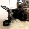 愛犬とのんびりしながらボンヤリ考える、働き続けたいなぁ