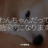 1369食目「わんちゃんだって糖尿病になります」犬の糖尿病