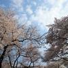 桜の園にて歌える