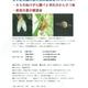 【地域情報】8/3(土)&17(土)哲学堂公園の夏の自然観察会