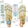 #83 足指を使えば身体の悩みは解決 足の親指が大きいのには意味がある