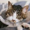 基準は何?愛猫ちゃんが通う動物病院の選び方