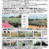 神原町花の会(花美原会)(352) コスモス畑と花協同活動