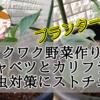 【ワクワク野菜作り!】芽キャベツとカリフラワー 病害虫対策にストチュウ!