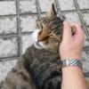 8月前半の #ねこ #cat #猫 その3