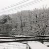 【初積雪】チュチュンがチュンが来た