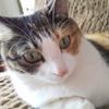 【愛猫日記】毎日アンヌさん#260