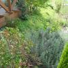 夏恒例 芝刈り作業