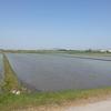 田植え風景を見ると嬉しくなります。