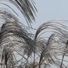 ペトロベトナム化学肥料を購入