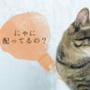 猫とトランプ