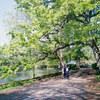 新緑の公園と小さなカメラ