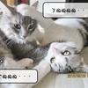 猫雑記 ~遊びか?お昼寝か?~