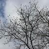 初冬の空の下