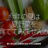 515食目「今年の夏は夏野菜を育ててみませんか」夏に旬を迎える野菜を自分で作れば超新鮮