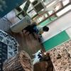 久しぶりの猫Cafe ARIGATO