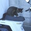 某所の猫&今日の野鳥観察