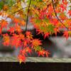 平林寺へ紅葉散歩
