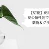 【切花】花屋で買える!夏の個性的でトロピカルな葉物&グリーン7選!